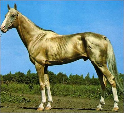 Rare Horse Breeds There Are Many Horse Breeds